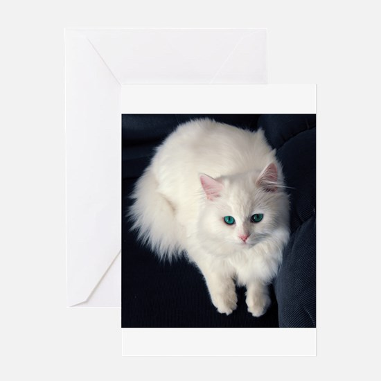 White Cat with Blue Eyes Greeting Cards