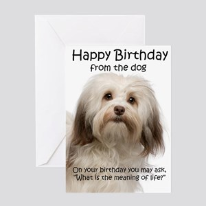 Funny Havanese Birthday Greeting Cards