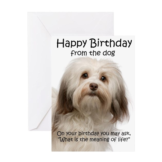 Funny Havanese Birthday Greeting Cards By Shopdoggifts