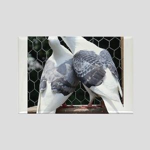 Saddler Homer Pigeons Magnets