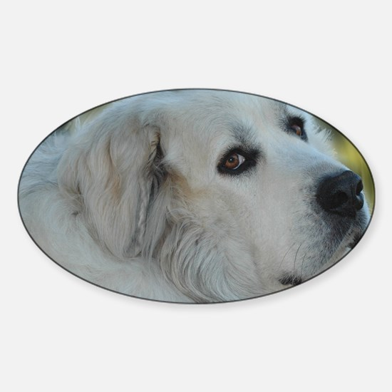 Funny Pyrenees Sticker (Oval)