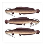 African Sharptooth Catfish Square Car Magnet 3