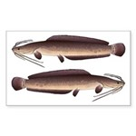 African Sharptooth Catfish Sticker