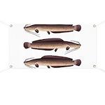 African Sharptooth Catfish Banner