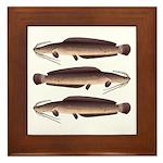 African Sharptooth Catfish Framed Tile