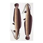African Sharptooth Catfish Area Rug