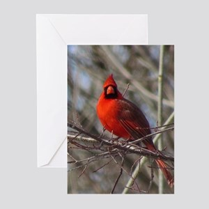 Male Cardinal Greeting Cards
