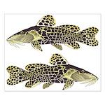 Giraffe Bubu Catfish Posters