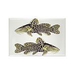 Giraffe Bubu Catfish Magnets