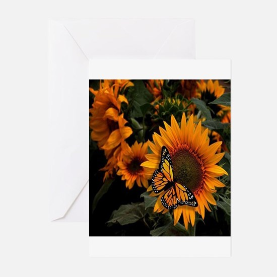 Funny Sunflower Greeting Cards (Pk of 20)