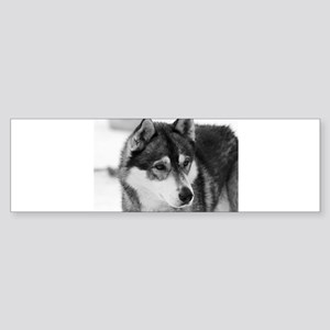 Husky Bumper Sticker