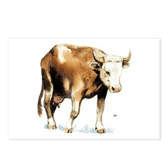 Cow Cattle Postcards (Package of 8)