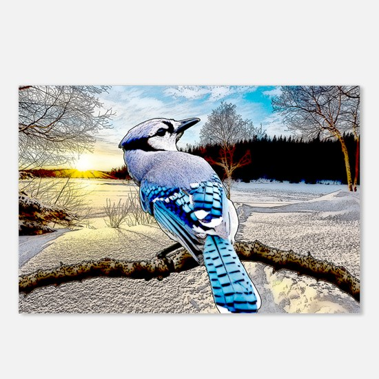 Blue Jay Sunrise Postcards (Package of 8)