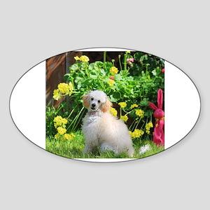 Spring Toy Poodle Sticker