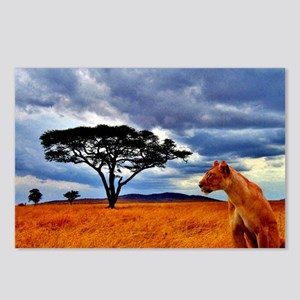 Lioness Storm Postcards (Package of 8)