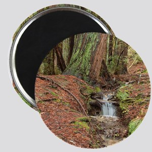 CALIFORNIA REDWOODS - Magnet