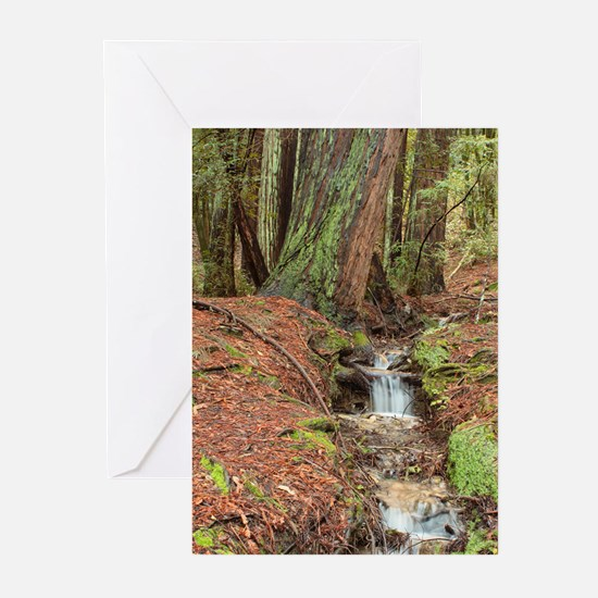 CALIFORNIA REDWOODS - Greeting Cards (Pk of 10)