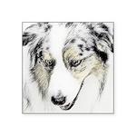 Australian Shepherd Square Sticker 3