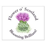 Blooming Thistle Posters
