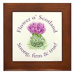 Scottish Thistle Framed Tile