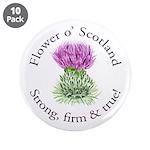 Scottish Thistle 3.5