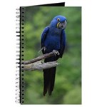 The Big Blue Journal