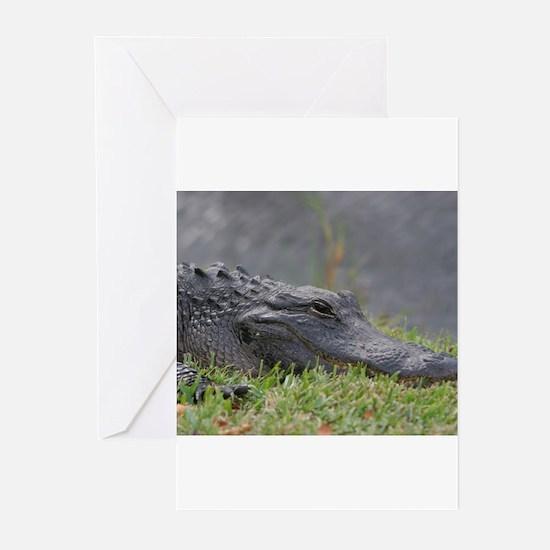 American Alligator, Everglades Greeting Cards
