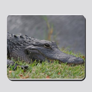 American Alligator, Everglades Mousepad