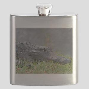 American Alligator, Everglades Flask