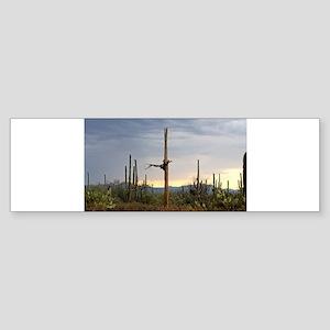 Tucson Saguaro at Sunset Bumper Sticker
