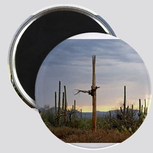 Tucson Saguaro at Sunset Magnets