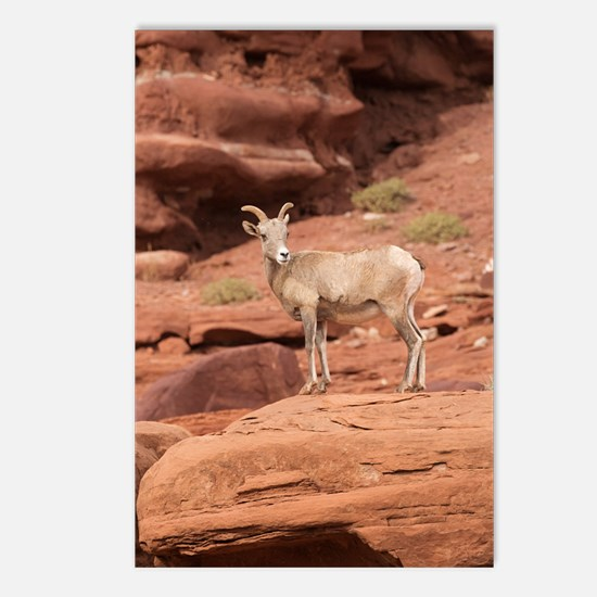 Unique National wildlife Postcards (Package of 8)