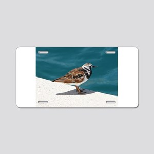 Ruddy Turnstone Bird - Bermuda Aluminum License Pl