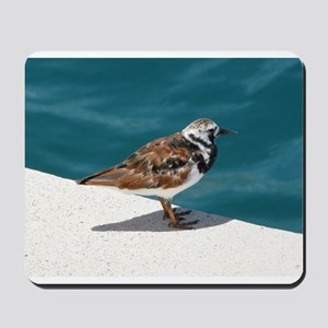 Ruddy Turnstone Bird - Bermuda Mousepad