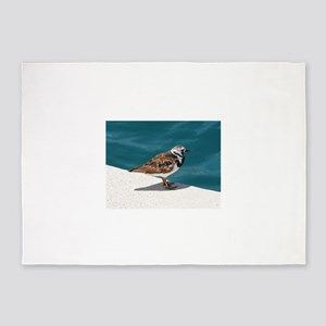 Ruddy Turnstone Bird - Bermuda 5'x7'Area Rug