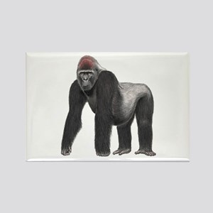SILVERBACK Magnets
