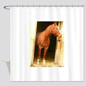 chestnut horse in stall Shower Curtain