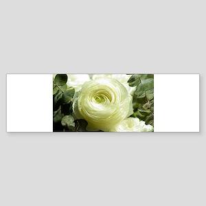 White roses Bumper Sticker