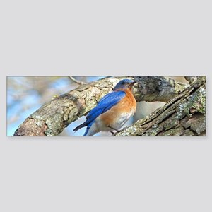 Bluebird Bumper Sticker