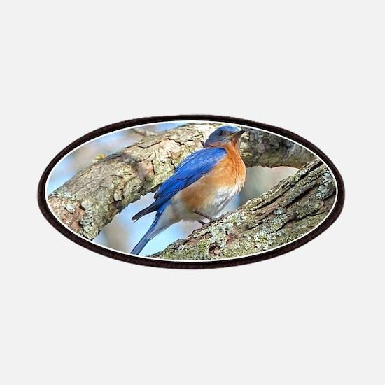 Bluebird Patch
