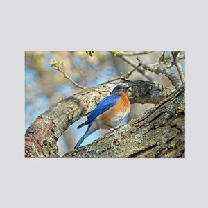 Bluebird Magnets