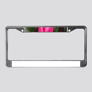 Single pink tulip bloom License Plate Frame