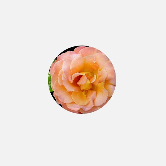 Orange Rosa Rose Mini Button