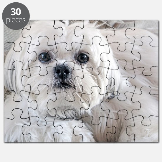 Cute Animal face Puzzle