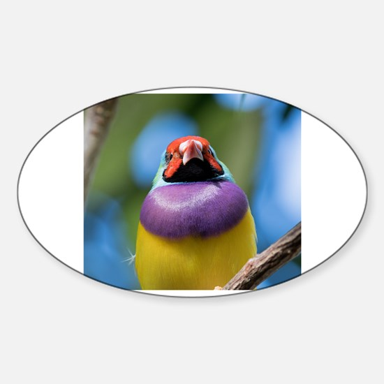 Cute Gouldian Sticker (Oval)