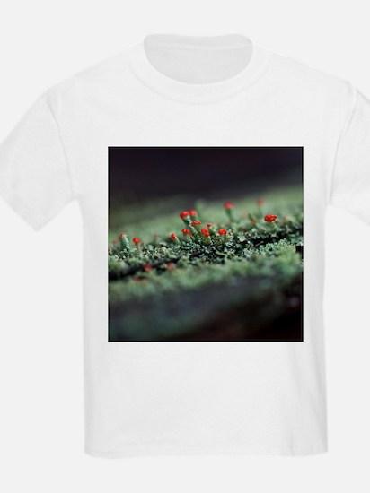 Beautiful Moss T-Shirt