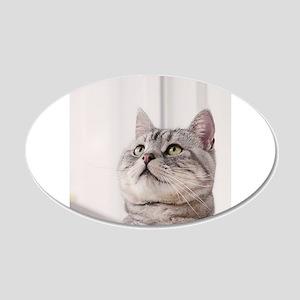 american shorthair grey tabby Wall Decal