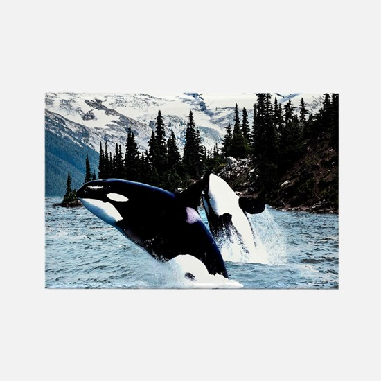Cute Orca Rectangle Magnet