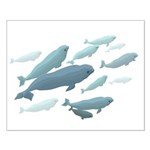 Beluga Whale Small Poster Wildlife Whale Print