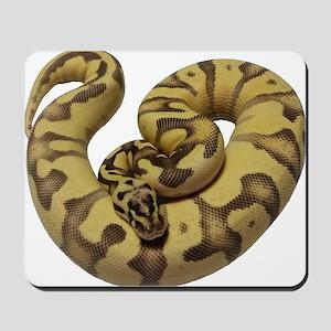 Enchi Fire ball python Mousepad